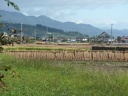 riziculture à Nagano