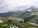 Alpes Zill