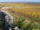 Vignes à Meursault (21)