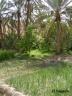 Oasis de Midés