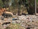 ordures à Bignona -1