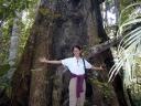 Tronc en Amazonie
