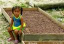 Sèchage des fèves de cacao