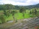 Rizières au Sri Lanka