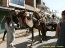 Le dromadaire comme moyen de transport au Rajasthan