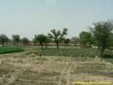Paysage rural du Rajasthan