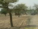 Exploitation agricole dans le Rajasthan