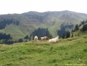 Alpage