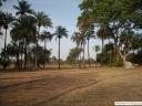 Casamance rizière en saison sèche