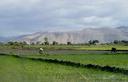 repiquage du riz dans la plaine de l'Artibonite (Haïti)
