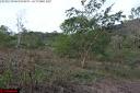 le grignotage de la forêt amazonienne par les activités agricoles